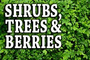 Shrubs, Trees & Berries